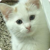 Adopt A Pet :: MARIAN - Acme, PA