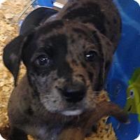 Adopt A Pet :: ROBYN'S LITTER #2 - Pompton Lakes, NJ