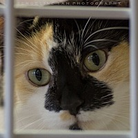 Adopt A Pet :: PRISCILLA - Houston, TX