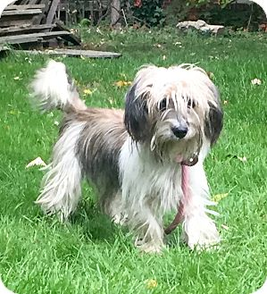 Terrier (Unknown Type, Small) Mix Dog for adoption in Bedminster, New Jersey - Polly