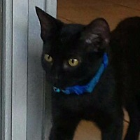 Adopt A Pet :: Lonnie - Ocala, FL