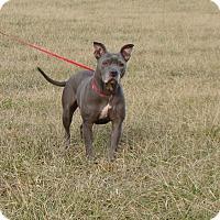 Adopt A Pet :: Mila - Cameron, MO