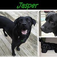 Adopt A Pet :: Jasper - Deer Park, NY