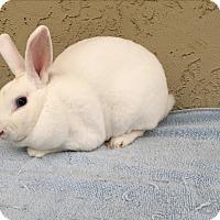 Adopt A Pet :: Blake - Bonita, CA