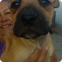 Adopt A Pet :: Zelda - Dana Point, CA