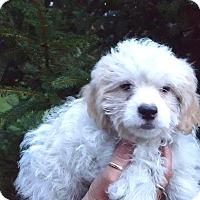 Adopt A Pet :: Sergio - Medora, IN