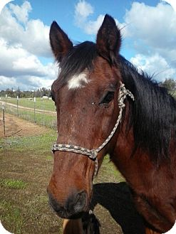 Quarterhorse Mix for adoption in Newcastle, California - Merle