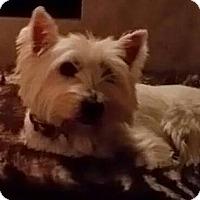 Adopt A Pet :: CAMERON IS ADOPTED! - Frisco, TX