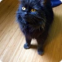 Adopt A Pet :: Vanessa - Stafford, VA
