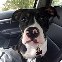 Adopt A Pet :: Brian - Northeast, OH