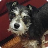Adopt A Pet :: Lenore - Forreston, TX