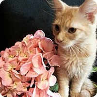 Adopt A Pet :: Punzle - Clearfield, UT