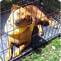 Adopt A Pet :: Ricky - Fowler, CA