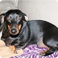 Adopt A Pet :: Dudley - Allentown, PA