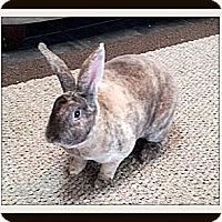 Adopt A Pet :: Seth - Williston, FL