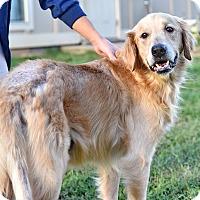 Adopt A Pet :: Bettis - New Canaan, CT