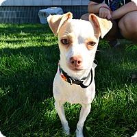 Adopt A Pet :: Natasha - Meridian, ID