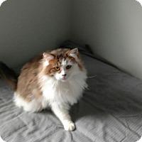 Adopt A Pet :: zz 'Miss Kitty' courtesy listing - Cincinnati, OH