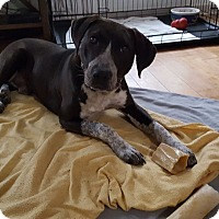 Adopt A Pet :: Rocket - Tallahassee, FL