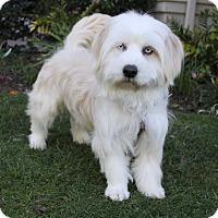 Adopt A Pet :: MARIBEL - Newport Beach, CA