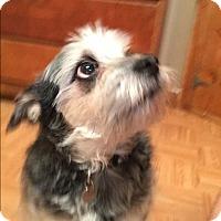 Adopt A Pet :: Kwaai - Bernardston, MA