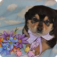 Adopt A Pet :: Charlotte (The Tar Heel Group) - Alexandria, VA