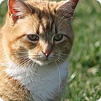 Adopt A Pet :: whitney - Maxwelton, WV