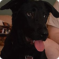 Adopt A Pet :: Makayla - Franklin, NC