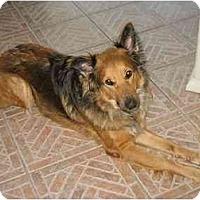 Adopt A Pet :: Brandi - Orlando, FL