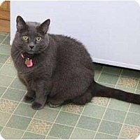 Adopt A Pet :: Shayla - Kirkwood, DE
