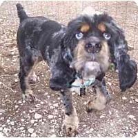 Adopt A Pet :: Brother - Houma, LA