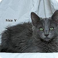 Adopt A Pet :: Nico V - Sacramento, CA