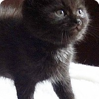 Adopt A Pet :: Cumin - N. Billerica, MA