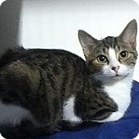 Adopt A Pet :: Lady - Hamilton, ON