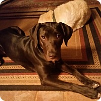 Adopt A Pet :: Daisy Jane - Cumming, GA