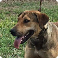 Adopt A Pet :: Lucy - Warrenton, NC