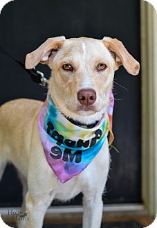 Retriever (Unknown Type) Mix Dog for adoption in Baton Rouge, Louisiana - Max