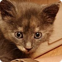 Adopt A Pet :: Bluebearry - St. Louis, MO