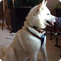 Adopt A Pet :: Anuk - Blackstock, ON