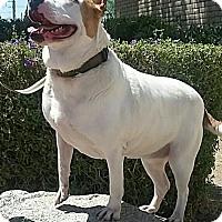 Adopt A Pet :: Lucy - Tempe, AZ
