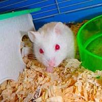 Adopt A Pet :: A1691870 - Los Angeles, CA