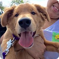 Adopt A Pet :: Rusty Pup - Portland, ME