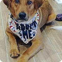 Adopt A Pet :: Theodore - Charlotte, NC