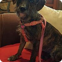Adopt A Pet :: Mattie - Duluth, GA