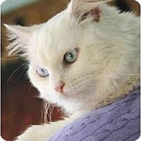 Adopt A Pet :: Curtis - Columbus, OH