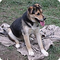 Adopt A Pet :: *Courtesy Post* Athena - Vansant, VA
