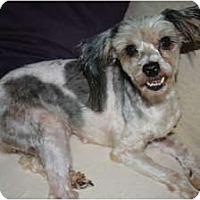 Adopt A Pet :: Maggie - Westfield, IN