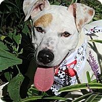 Adopt A Pet :: Nayla - Wytheville, VA