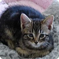 Adopt A Pet :: RICKY -2014 - Hamilton, NJ