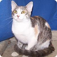 Adopt A Pet :: K-Sasha2-Meredith - Colorado Springs, CO